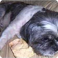 Adopt A Pet :: Meiko - Mays Landing, NJ