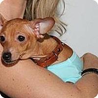 Dachshund Mix Dog for adoption in Miami, Florida - Maryjo