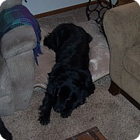 Adopt A Pet :: Misha - Lee's Summit, MO