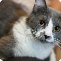 Adopt A Pet :: Starbrite - Canoga Park, CA
