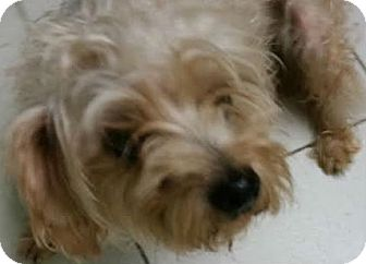 Terrier (Unknown Type, Small) Mix Dog for adoption in Philadelphia, Pennsylvania - Pooch
