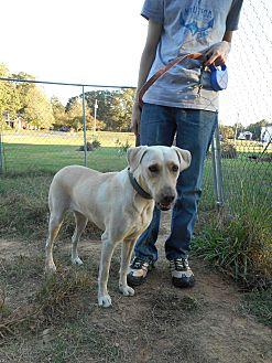 Labrador Retriever Mix Dog for adoption in Monroe, North Carolina - Josie