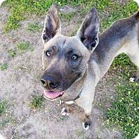 Adopt A Pet :: Scotch - Fort Riley, KS