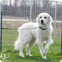 Adopt A Pet :: Crystal - SPECIAL NEEDS - Northville, MI