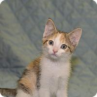 Adopt A Pet :: Abby - Medina, OH