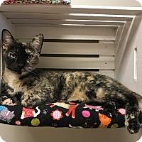 Adopt A Pet :: Destiny - Island Park, NY