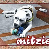 Adopt A Pet :: Mitzie - Valley Stream, NY