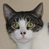 Adopt A Pet :: Milo - North Branford, CT