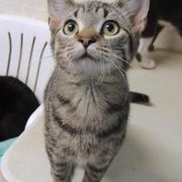 Adopt A Pet :: Miss Bug - Westville, IN