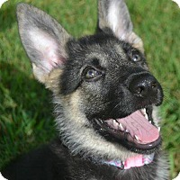 Adopt A Pet :: Solo - Colmar, PA