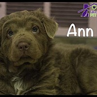 Adopt A Pet :: Ann - Richardson, TX