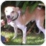 Photo 3 - Jack Russell Terrier Mix Dog for adoption in Poway, California - JACK