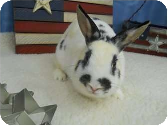 Other/Unknown Mix for adoption in Roseville, California - Blossom