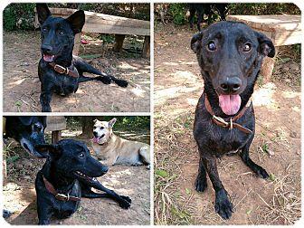 Terrier (Unknown Type, Medium) Mix Dog for adoption in Toronto/GTA, Ontario - SUNSUN