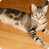 Adopt A Pet :: Katy Purry - Miami, FL
