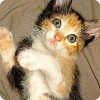 Adopt A Pet :: Blanche - Escondido, CA