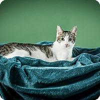 Adopt A Pet :: Ernest - St. Louis, MO