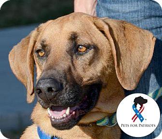Hound (Unknown Type) Mix Dog for adoption in Killeen, Texas - Lance