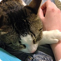 Adopt A Pet :: Omari - Chicago, IL
