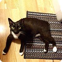 Adopt A Pet :: Shawn - Simpsonville, SC