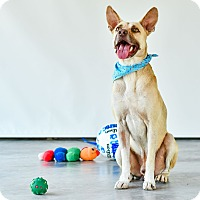 Adopt A Pet :: Charley - Victoria, BC