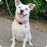 Adopt A Pet :: Kaylee - Tracy, CA