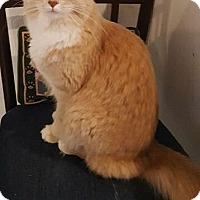 Adopt A Pet :: Stockton - Washburn, WI