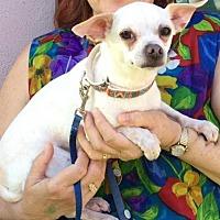 Adopt A Pet :: Ace - Sarasota, FL