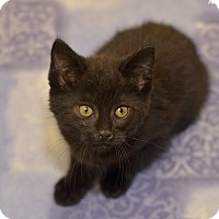 Adopt A Pet :: Clifford - Medina, OH