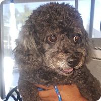 Adopt A Pet :: Blazer - Canoga Park, CA