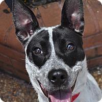 Adopt A Pet :: Dixie - Atlanta, GA