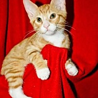 Adopt A Pet :: Jackson - Centerville, GA