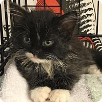 Adopt A Pet :: Matilda - Furlong, PA