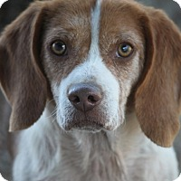Adopt A Pet :: Edwin (Old Man Winter) - Hooksett, NH