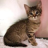 Adopt A Pet :: Poppy - Americus, GA