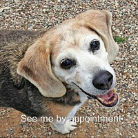 Adopt A Pet :: Lucy - Green Bay, WI