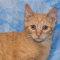 Adopt A Pet :: Cheeto - Elmwood Park, NJ