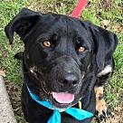 Adopt A Pet :: Murphy *Adopt or Foster*