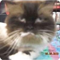 Adopt A Pet :: Barnaby - Riverside, RI