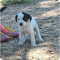 Adopt A Pet :: Macon - New Boston, NH