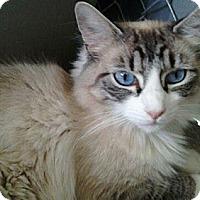 Adopt A Pet :: Juicebox - Modesto, CA