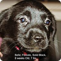 Adopt A Pet :: Belle - Poughkeepsie, NY