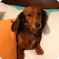 Adopt A Pet :: *Greta - PENDING - Westport, CT