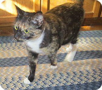 Domestic Shorthair Cat for adoption in Witter, Arkansas - Maisey