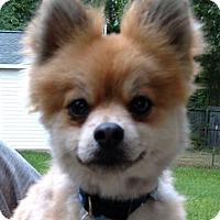 Adopt A Pet :: Dexter - Irmo, SC
