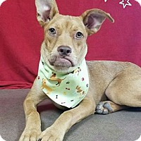 Adopt A Pet :: Gino - Troutville, VA