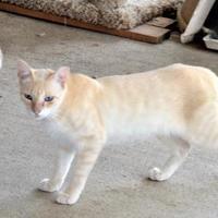 Adopt A Pet :: Groovey 05-16-17 - Bulverde, TX