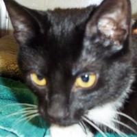Adopt A Pet :: Brooke - Memphis, TN