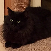 Adopt A Pet :: Rascal - Lenhartsville, PA