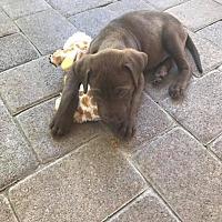 Adopt A Pet :: Demi - BONITA, CA